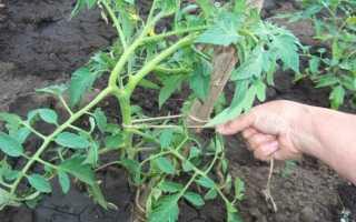 Как связать помидоры в теплице и в земле: способы связать