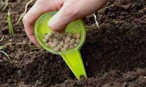 Как вырастить горох в домашних условиях на подоконнике: пошаговое руководство, советы для получения урожая круглый год