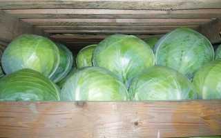 Сорт капусты Валентина, описание, характеристика и отзывы, а также особенности выращивания
