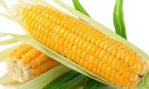 Кукуруза при подагре: можно или нет, стоит ли есть её при этом заболевании, в каком виде, какие противопоказания