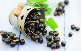 Черная смородина на диете – польза и вред, правила диетического питания, отвар из листьев смородины и другие рецепты