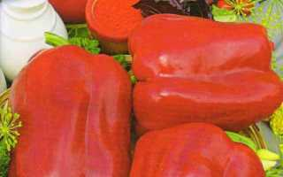 Перец Омброне (f1): отзывы о сладком гибридном сорте, его преимущества и недостатки, правила ухода