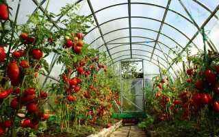 Суперранние сорта томатов для открытого грунта и для теплиц: обзор лучших, их описание, фото полученных плодов и отзывы дачников