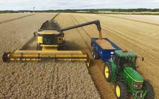 Урожайность пшеницы с 1 га: сколько урожая озимой и яровой пшеницы можно собрать с гектара, от чего зависит этот показатель и как его улучшить