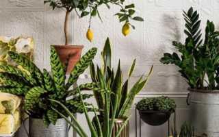 Комнатные цветы – фото и названия, каталог лучших комнатных растений