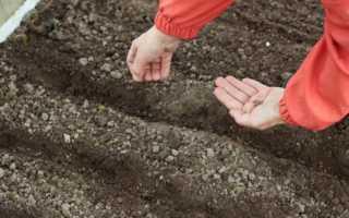 Благоприятные дни для посадки моркови и свеклы в 2020 году по фазам луны | Общество | Новости Селдона