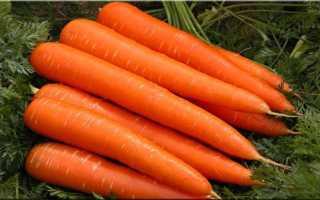 Морковь Лосиноостровская 13: описание и характеристики сорта, особенности выращивания, отзывы дачников, фото
