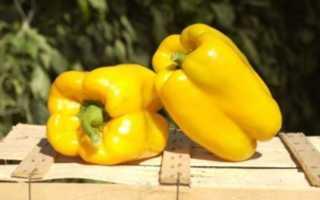 Перец Бугай: характеристика и описание сладкого сорта, отзывы о нем, руководство по уходу и выращиванию