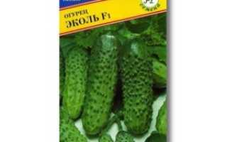 Огурец Эколь (f1): отзывы о плюсах и минусах, инструкция по выращиванию, полезные советы и характеристики урожая, фото