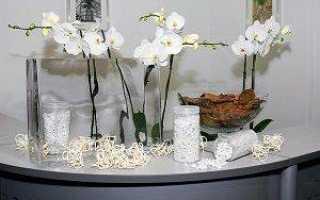 Выращивание орхидей в стеклянных горшках (вазах) без земли: как ухаживать за прозрачной вазой и фото емкостей