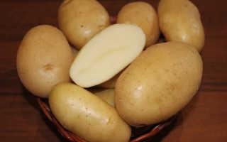 Картофель Крепыш: описание сорта, фото, отзывы о вкусовых качествах и сроках созревания, особенности выращивания и хранения, характеристика урожайности