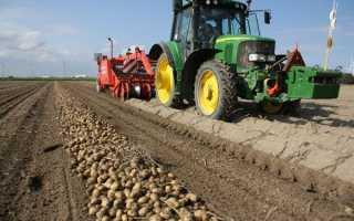 Урожайность картофеля с 1 га: сколько можно собрать картошки, от чего зависит урожай, как его повысить