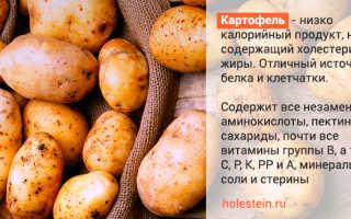 Картофель при повышенном холестерине: можно ли есть, если в крови превышены показатели, как и сколько картошки употреблять