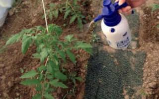 Как подкармливать томаты борной кислотой в каких пропорциях, в теплице и на улице
