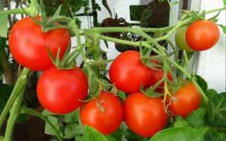 Томат Бетта: характеристика сорта, фото плодов, описание особенностей выращивания, а также отзывы фермеров об этих помидорах