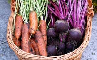 Советы по сбору моркови и свеклы и как сохранить урожай до весны
