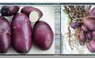 Картофель по-цыганский