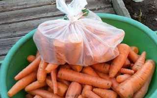 Как хранить морковь до весны в подвале и в городской квартире