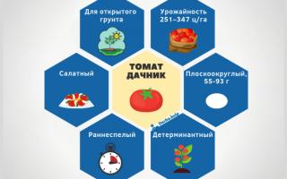 """Томат """"Дачник"""": характеристика и описание сорта помидор с фото, отзывы дачников об урожайности"""