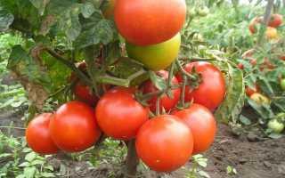 Томат Иришка: характеристика и описание сорта помидоров, отзывы дачников со стажем, фото кустов и полученных плодов