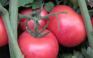 Томат пинк леди f1: описание гибрида и его урожайность, преимущества и недостатки, отзывы тех, кто сажал
