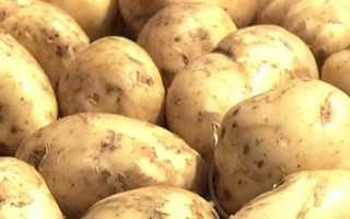 Картофель Белый лебедь: описание сорта, фото, отзывы о вкусовых качествах и сроках созревания, особенности выращивания и хранения, характеристика урожайности
