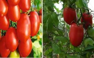 Томат Кенигсберг золотой: отзывы, фото полученного урожая, преимущества и недостатки сорта, секреты выращивания
