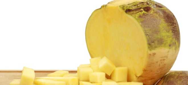 Брюква и репа: в чем разница, отличия во внешнем виде и свойствах, чем отличаются эти овощи от турнепса
