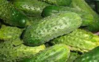 Огурцы Пальчики: описание сорта, фото полученного урожая, отзывы тех, кто выращивал