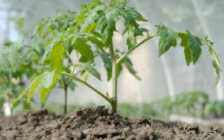 Сажаем помидоры в теплицу из поликарбоната: как и когда правильно сажать, схема посадки и какие семена лучше высаживать