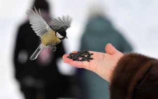 Читайте, можно ли кормить птиц рисом: едят ли воробьи, синицы и другие птички рисовую и остальные крупы (пшено, гречку), можно ли давать вареный рис