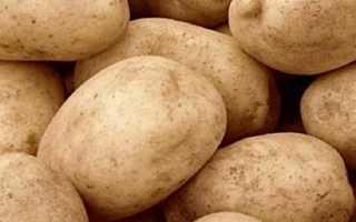 Картофель Тулеевский: характеристика и описание сорта, отзывы о картофеле, вкусовые качества и особенности выращивания