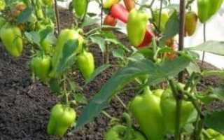 Как сажать перец в теплице: пошаговая инструкция и условия посадки рассады в теплице, дальнейший уход за рассадой