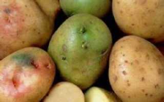 Почему картошка зеленеет: можно ли есть позеленевшую при хранении на свету, если обрезать цветную часть, чем опасно и вредно для человека употреблять в пищу,