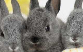 Можно ли давать кроликам дыню или шкуру дыни?