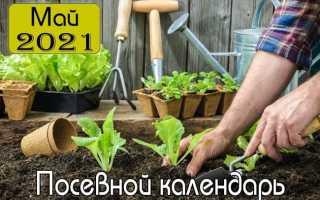 Май 2021 года – Лунный посевной календарь для садовода, садовода и цветовода!