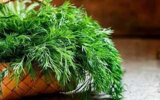 Семена укропа при беременности: как допустимо употреблять зелень, можно ли семена и отвар укропа (от отеков и т.д.), опасность применения на ранних сроках