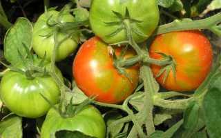 Чем и как можно обработать помидоры для завязи плодов в открытом грунте и теплице: народные домашние средства