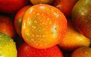 Посадка томатов под зиму в открытый грунт: посев помидоров