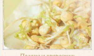 Семена брокколи для проращивания: чем полезны, как выглядят, как правильно проращивать в домашних условиях и есть