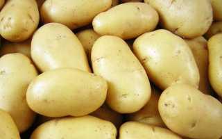 Картофель Фермер: описание сорта, фото, отзывы о вкусовых качествах и сроках созревания, характеристика урожайности картошки, а также советы фермеров по уходу