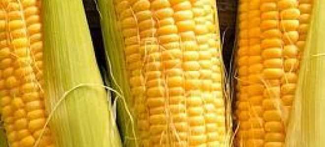 Сорта кукурузы: какие бывают, виды семян, характеристика и описание разновидностей, их фото и отзывы фермеров