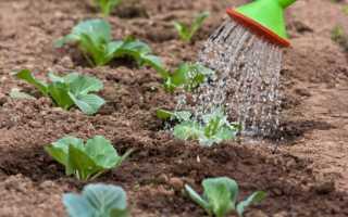 Когда сажать цветную капусту и брокколи в грядку, сроки посева в 2020 году