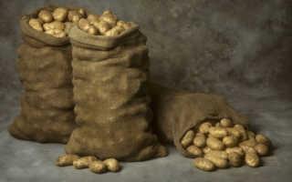 Гниет картошка в погребе: что делать, если картошка при хранении в подвале или после уборки загнивает, покрывается белой плесенью, почему это происходит