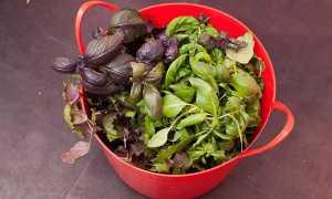 Как сушить базилик в домашних условиях: 4 простых способа приготовить приправу на зиму
