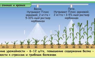 Осенняя подкормка озимой пшеницы: как, чем и каким образом подкормить азотными удобрениями