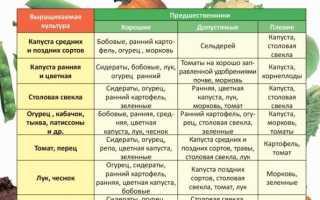 Советы, что сажать после тыквы на следующий год: правила севооборота, что можно посадить до и после тыквы, а что нет, что высаживать рядом