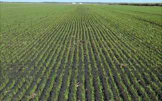 При какой температуре прорастает пшеница: какие условия должны быть для проращивания, сумма активных температур, условия роста озимых и яровых злаков