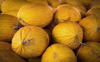 Дыня Кассаба (зимняя): описание сорта, фото зеленых и спелых плодов, особенности выбора и выращивания