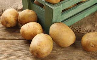 Хранение картошки в гараже без погреба: как правильно сохранить без подвала зимой в холодной яме, как и в чем лучше лежать картофелю